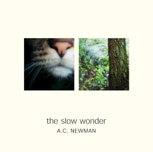 The Slow Wonder